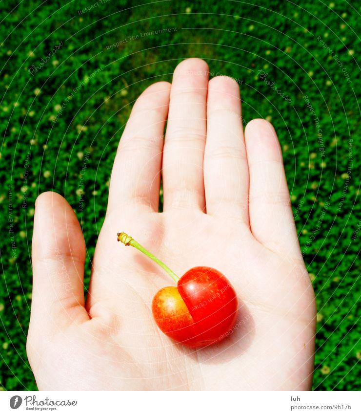 Darf ich vorstellen? Cherrylady. Hand grün rot Sommer gelb Wiese Gras Haut Frucht Rasen lecker Kirsche Handfläche