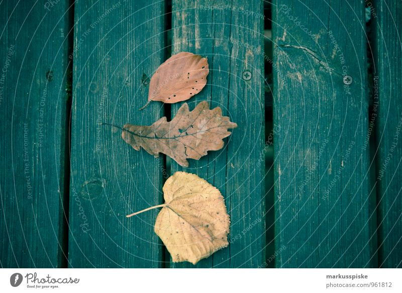 herbstlaub Kind Pflanze Baum Blatt Spielen Garten Park Freizeit & Hobby ästhetisch Ausflug berühren Abenteuer Bildung Herbstlaub Kindergarten herbstlich