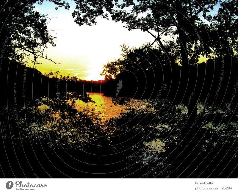 Abendstimmung Wasser Sonne Landschaft Seeufer Abenddämmerung schimmern Stimmungsbild