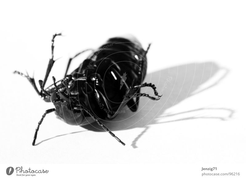 Bug is over. Schiffsbug Insekt Makroaufnahme Schädlinge Rückenlage Käfer