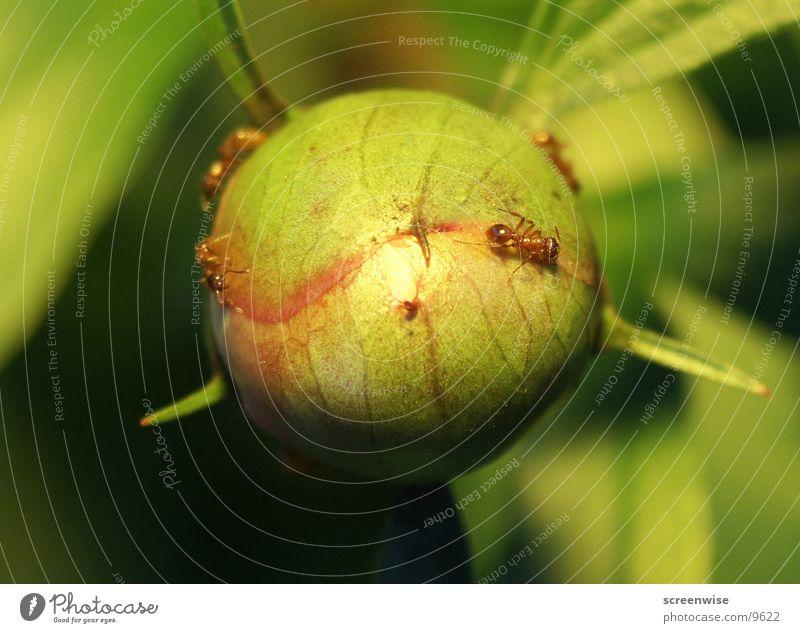 Planet der Ameisen Blume krabbeln Makroaufnahme