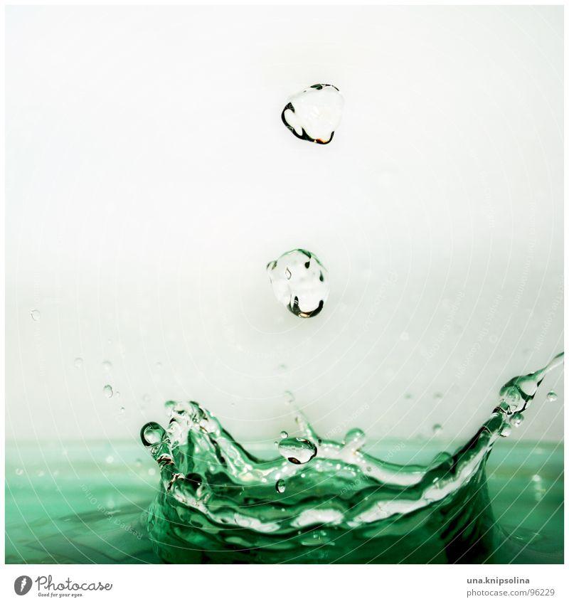 krönung Wasser Wassertropfen nass grün türkis spritzen Krönung Baumkrone Farbfoto Nahaufnahme Detailaufnahme