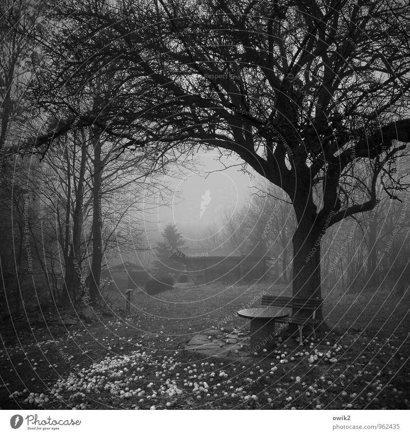 Gefallene Früchte Natur Pflanze Baum Landschaft dunkel Umwelt Herbst Gras Gebäude Holz Nebel Ast Trauer viele Bank Hütte