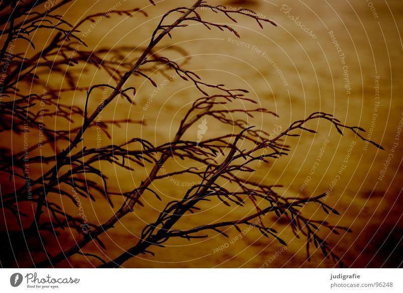 Zwischen Leben und Tod Natur Baum Sommer Strand dunkel Tod Holz Wärme Sand braun orange Küste Umwelt Trauer Physik Ast