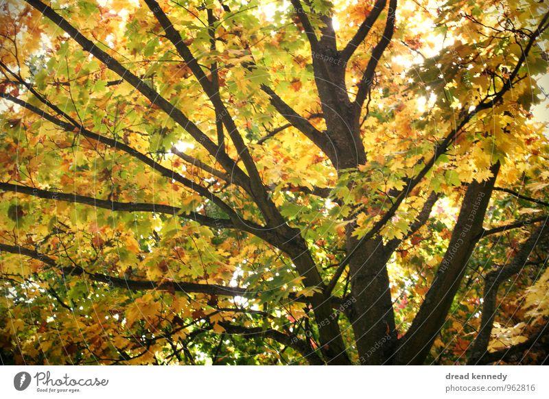 Herbstbaum 2.0 Umwelt Natur Landschaft Pflanze Schönes Wetter Baum Blatt Garten Park Wiese Wald ästhetisch gleich Idylle Stimmung Umweltschutz Herbstlaub Ast