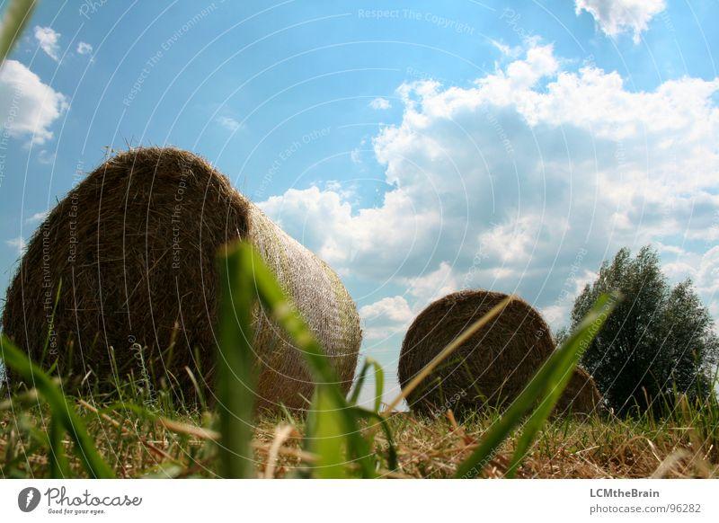 Heu Vs. Traktor II Natur Himmel Sonne blau Sommer ruhig Wolken gelb Wiese Gras Landschaft Feld Dorf Landwirtschaft Ernte Stroh