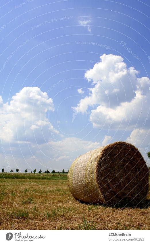Strohballen II Natur Himmel Sonne blau Sommer ruhig Wolken gelb Wiese Gras Landschaft Feld Dorf Landwirtschaft Ernte