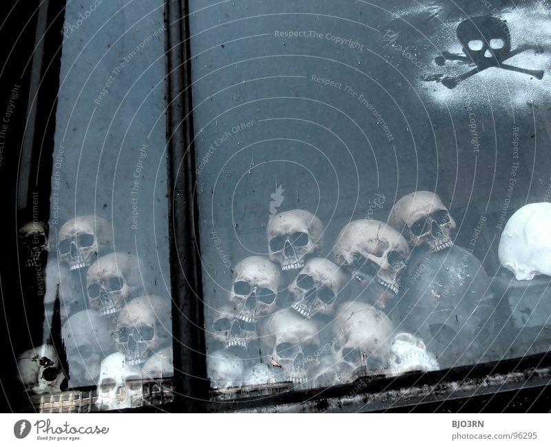 Skulls Skelett Schädel Alptraum antik Archäologe Archäologie beerdigen Beerdigung finden Gehirn u. Nerven Grab Halloween Krieg Leben töten Paddel