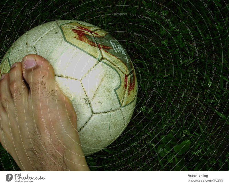 Fuß-Ball Haut Sport Ballsport Fußball Beine Leder Spielen stehen dunkel hell rund grün weiß Zehen Zehennagel Rasen Wiese Wabe Strukturen & Formen Farbfoto