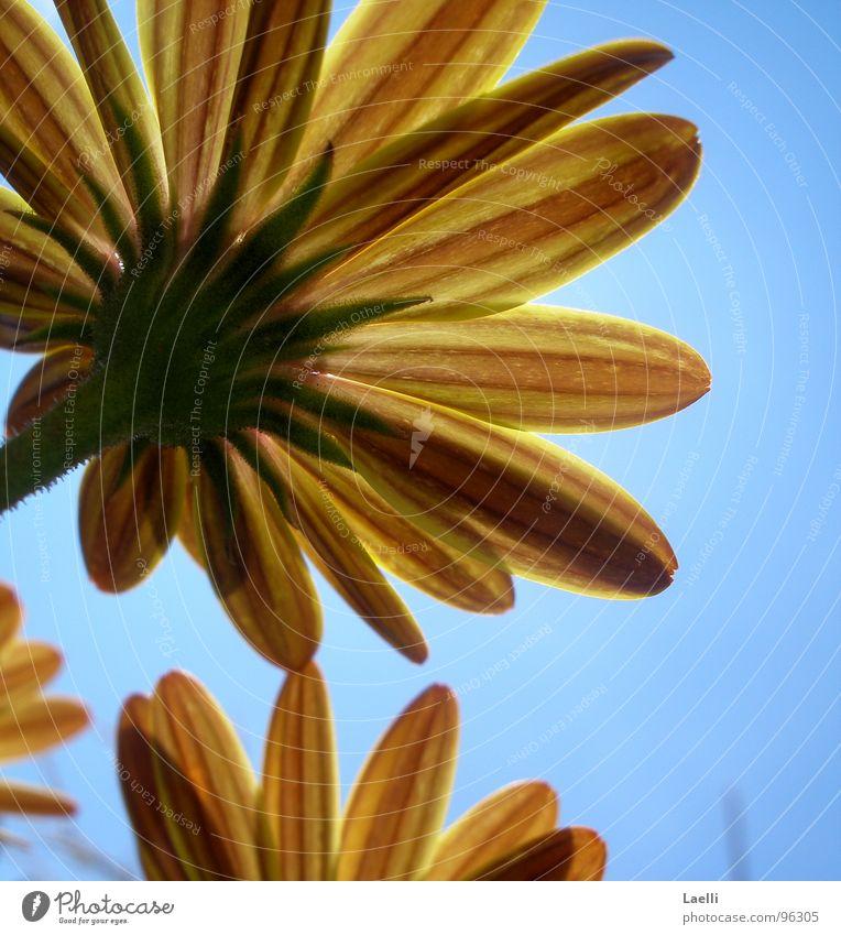 Unter den Blumen lll Himmel Blume grün rot Sommer gelb Blüte Fröhlichkeit Stengel Blütenblatt