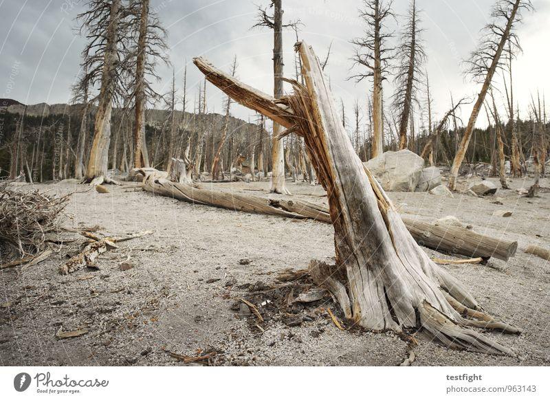 baumsterben Umwelt Natur Landschaft Pflanze Tier Erde Sand Wolken Klima Klimawandel Wetter schlechtes Wetter Baum Wald bedrohlich gruselig Krankheit
