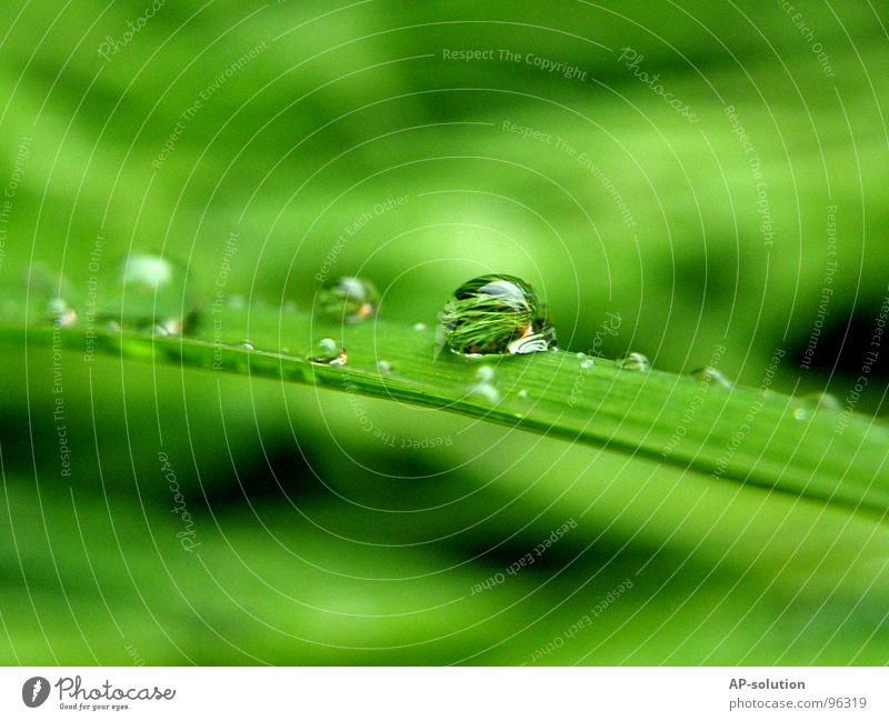 Tropfen *4 Natur grün Wasser ruhig Regen glänzend frisch Wassertropfen Elektrizität nass Seil rund Klarheit nah Teile u. Stücke Konzentration