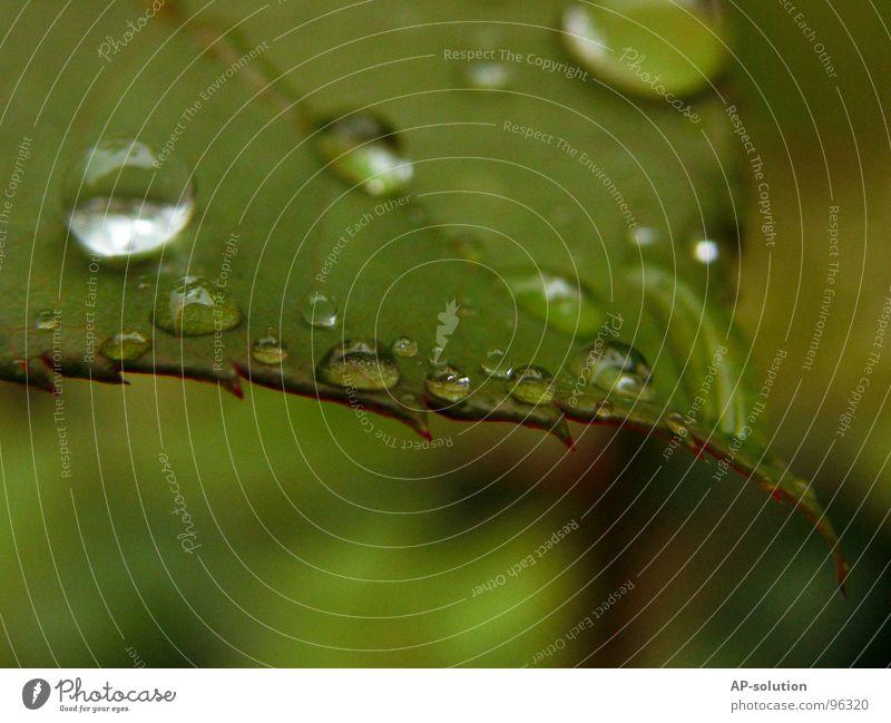 Tropfen *5 Regen Makroaufnahme frisch nass feucht Reflexion & Spiegelung grün grasgrün rund glänzend Wasser ruhig leicht perfekt Konzentration Nahaufnahme