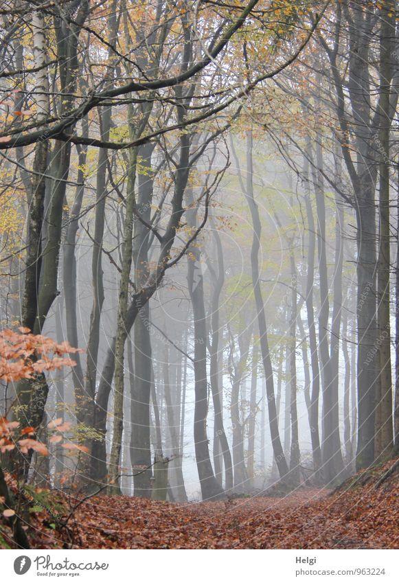 Stockwerk | dick und dünn...oben und unten... Umwelt Natur Landschaft Pflanze Herbst Nebel Baum Blatt Wildpflanze Ast Baumstamm Wald stehen dehydrieren Wachstum