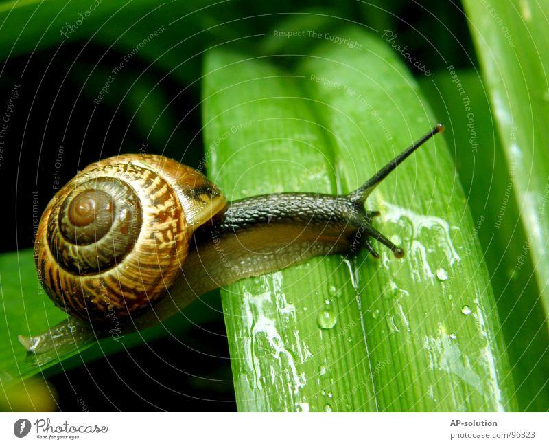 Schnecke *2 Natur grün Tier Blatt Haus Auge Leben Gras Regen nass Geschwindigkeit Wassertropfen Lebewesen feucht Spirale