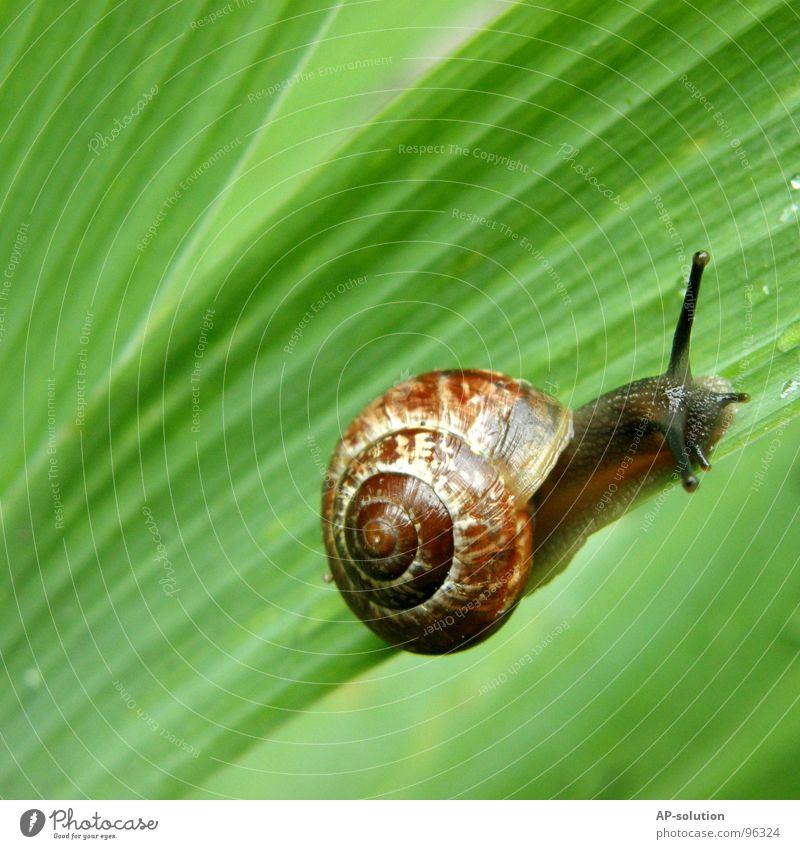 Schnecke *3 Natur grün Tier Blatt Haus Auge Leben Gras Regen nass Geschwindigkeit Wassertropfen Lebewesen feucht Spirale