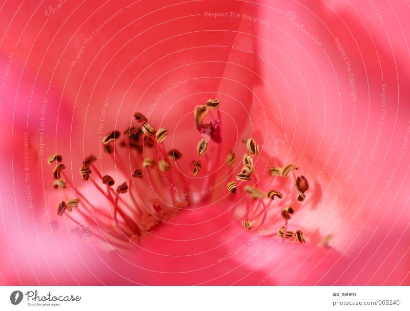 Inneres Natur Pflanze schön Farbe rot ruhig Erotik Blüte Garten rosa Park Lifestyle orange elegant leuchten ästhetisch