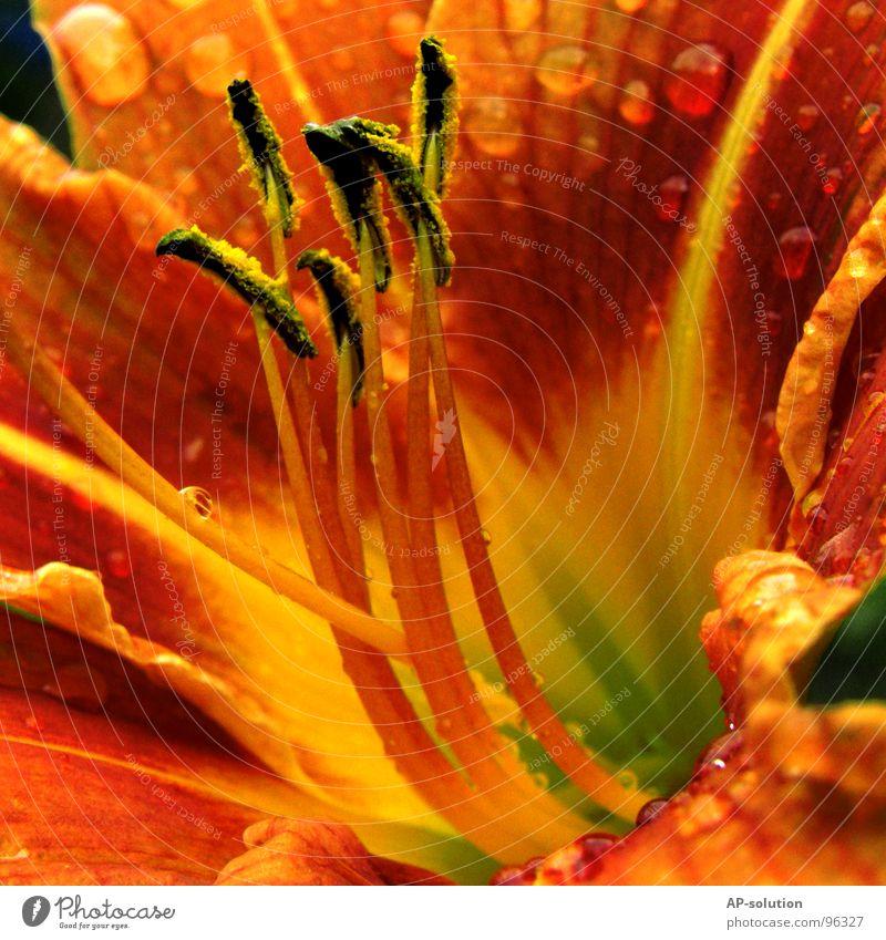orange Blume *2 Natur Pflanze schön grün Sommer Wasser rot ruhig gelb Blüte Frühling Garten Regen glänzend