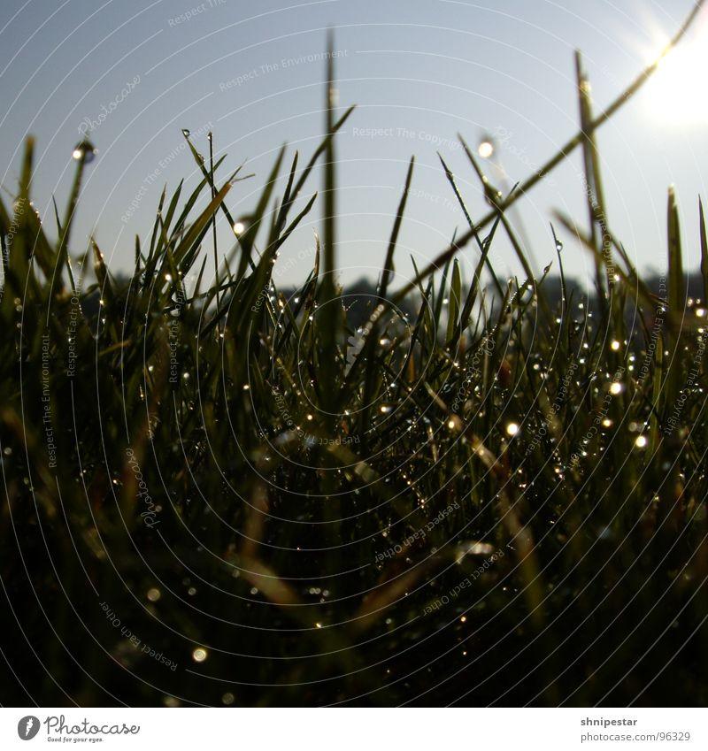 Der letzte Morgentau in Westhofen Himmel Sommer Freude Wiese Gras Wassertropfen nass Seil Quadrat feucht