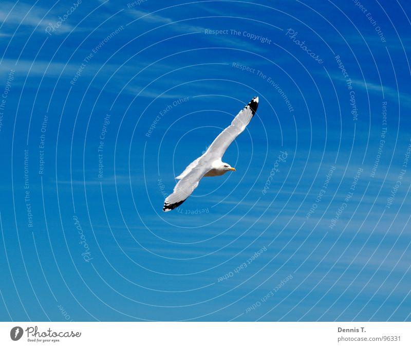 Sailing across the sky Himmel Natur weiß schön Meer Ferien & Urlaub & Reisen Sommer Freude Strand Wolken Tier Auge Freiheit oben Sand Beine