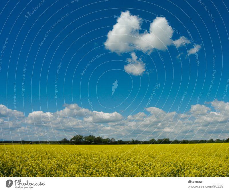 Canola cloud Natur Sommer gelb Holzmehl