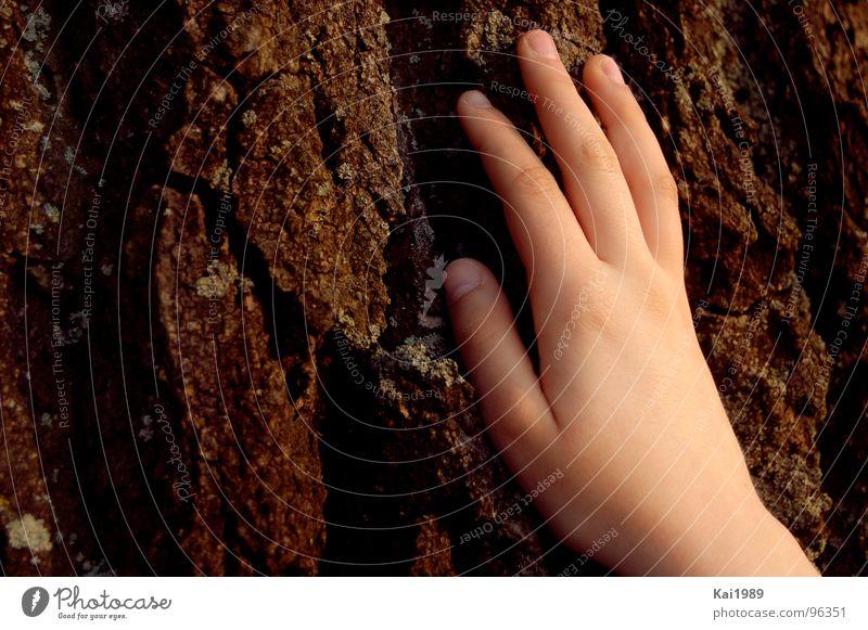 Generationenkonversation Mensch Natur Hand alt Baum Pflanze braun Feste & Feiern Haut Finger weich Vergänglichkeit Jahreszeiten hart Baumrinde Kinderhand
