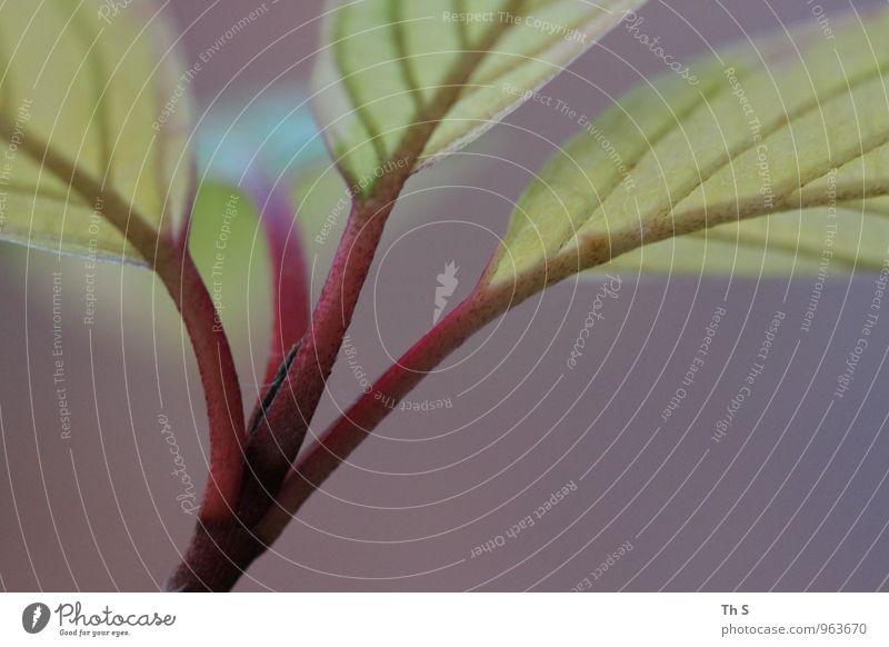 Blatt Natur Pflanze schön grün Farbe Sommer rot ruhig Herbst natürlich Stimmung elegant Zufriedenheit authentisch ästhetisch