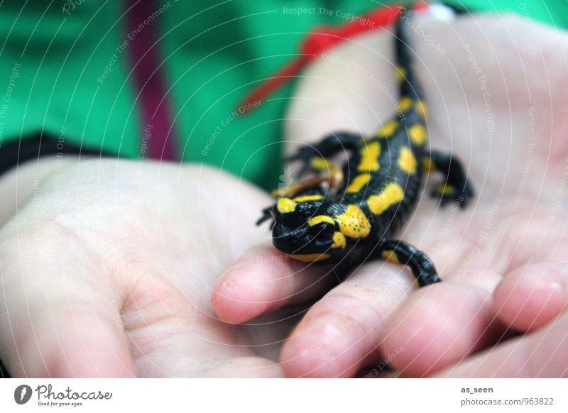 Lurchi Mensch Kind Natur nackt grün Hand rot Tier schwarz gelb Leben glänzend Kindheit nass Finger 8-13 Jahre
