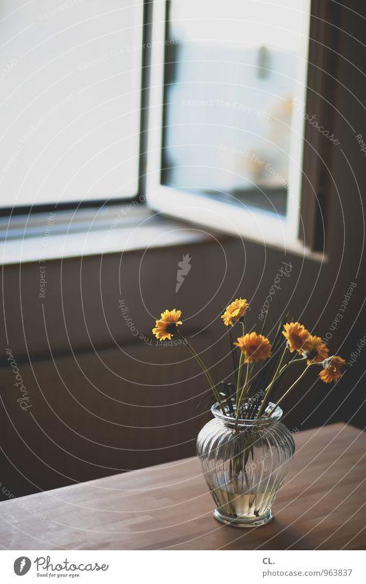 blumen Blume Fenster gelb Innenarchitektur Wohnung Raum Häusliches Leben Dekoration & Verzierung offen Tisch Möbel gemütlich einrichten Blumenvase lüften