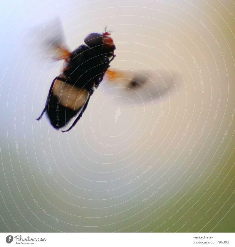 Vor Freude schwebend *surr* grün ruhig gelb grau Haare & Frisuren Beine klein Fliege fliegen Geschwindigkeit stehen Flügel Schweben Nervosität stagnierend