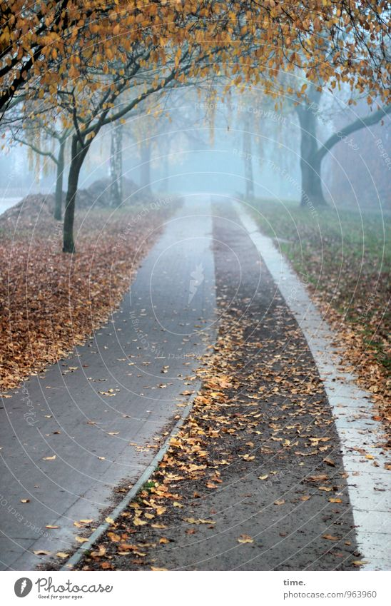 Abgang Umwelt Natur Landschaft Herbst Nebel Baum Blatt Laubbaum Park Verkehr Wege & Pfade Fahrradweg Gefühle Stimmung Erholung Ordnung träumen Farbfoto