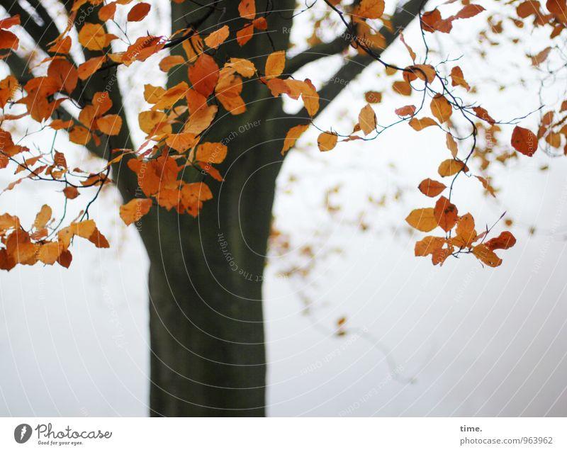Abtanz Umwelt Natur Landschaft Pflanze Herbst Nebel Baum Blatt Park leuchten natürlich schön Wahrheit authentisch Leben Ausdauer standhaft Traurigkeit Tod