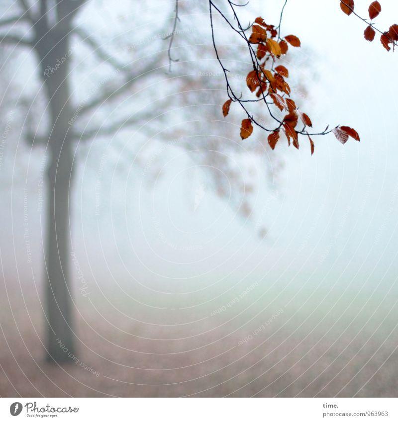 Abtanz II Umwelt Natur Landschaft Herbst Nebel Baum Blatt Ast Herbstlaub Park hängen kalt Trauer Müdigkeit Heimweh Einsamkeit Erschöpfung Leben Stimmung Tod