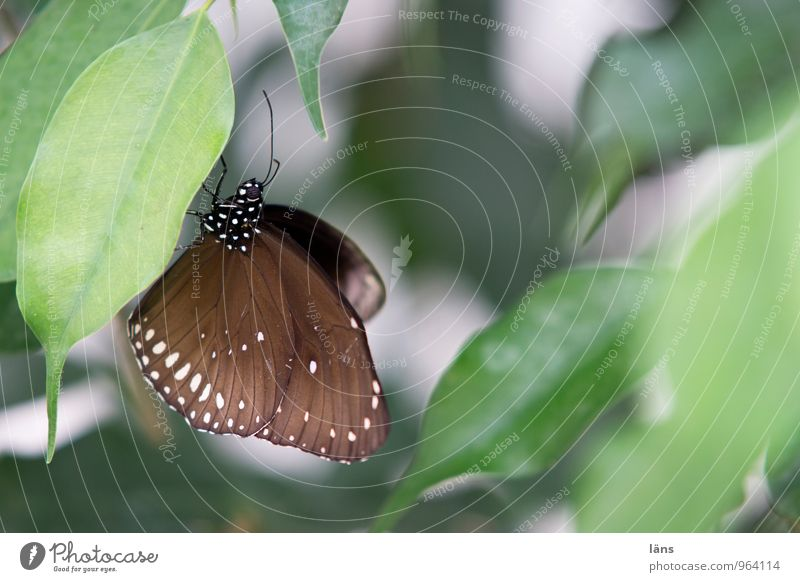 angepasst grün Erholung Tier braun sitzen ästhetisch Flügel Schmetterling