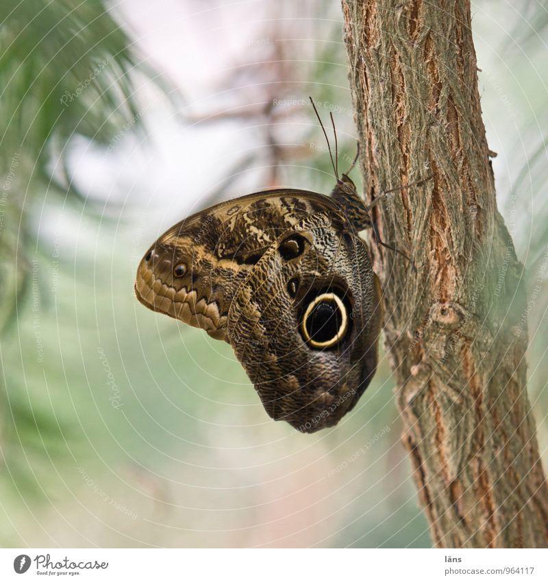 ohne wenn... aber Schmetterling Ast Blätter Natur insekt grün braun