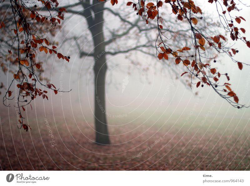 Abtanz III Umwelt Natur Landschaft Herbst Nebel Baum Laubbaum Herbstlaub Herbstfärbung Herbstwetter Herbstwald Herbstlandschaft Park Wiese Traurigkeit Sorge
