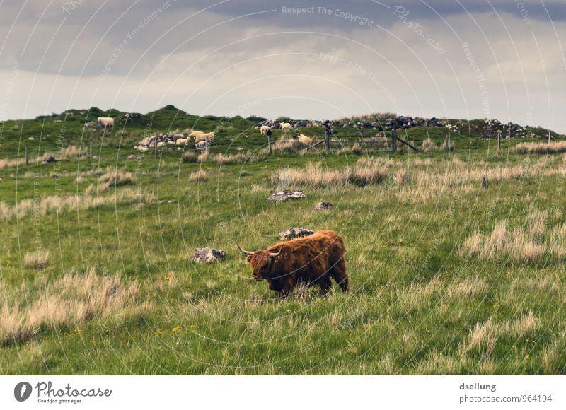 Herr der saftigen Wiesen Himmel Natur blau Pflanze grün Sommer Landschaft Tier Umwelt natürlich Gesundheit braun orange Feld wild