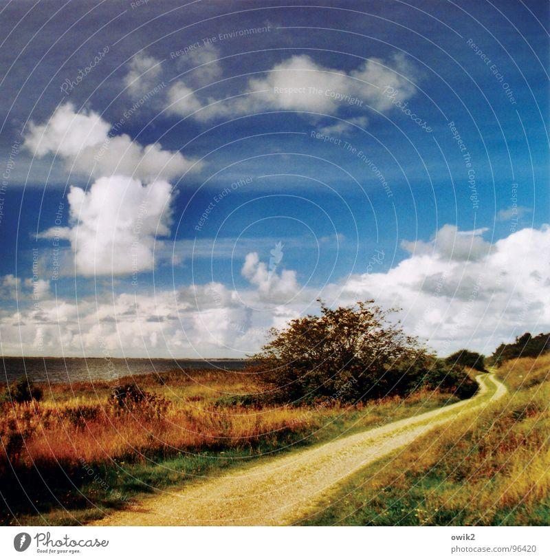 Kurvenreiche Strecke Himmel Natur Pflanze Wasser Meer Landschaft Wolken ruhig Ferne Strand Umwelt Wege & Pfade Küste Freiheit Sand Zufriedenheit