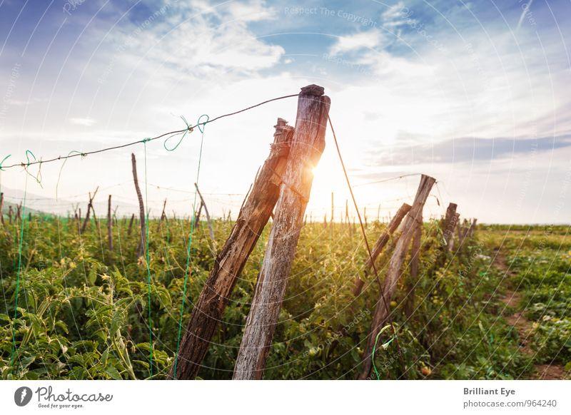 Holzpfosten in der Abendsonne Natur alt Pflanze Sommer Sonne Erholung Umwelt Stimmung Feld Wachstum Schönes Wetter Vergänglichkeit Landwirtschaft nachhaltig