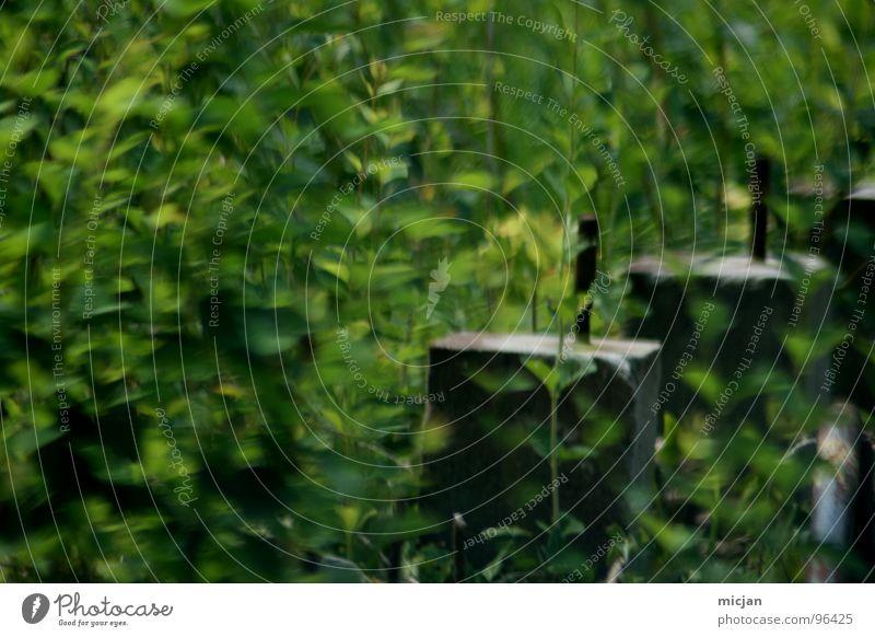 Green Dream Natur grün Pflanze Wald Bewegung Garten Stein Umwelt kaputt Vergänglichkeit verfallen Wildtier Urwald Ruine schäbig Sitzgelegenheit
