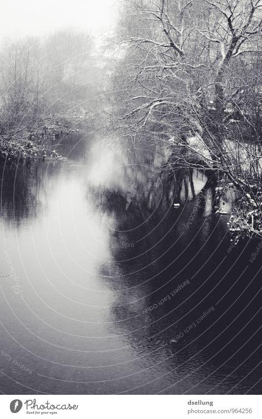 bitterkalt. Umwelt Natur Landschaft Winter Klima Eis Frost Schnee Baum Park Wald Moor Sumpf Teich See Fluss dunkel nass natürlich wild Traurigkeit Trauer Tod