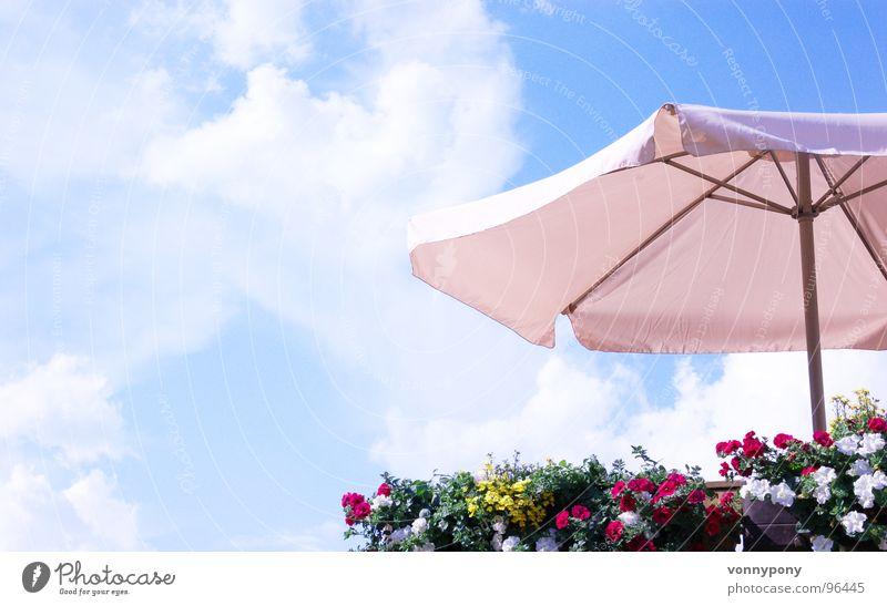 Gut geschützt Blume Sonnenschirm mehrfarbig Balkon weiß Physik Sommer Wolken Bauernhof Ferien & Urlaub & Reisen Wochenende Franken Himmel blau Schutz oben Wärme