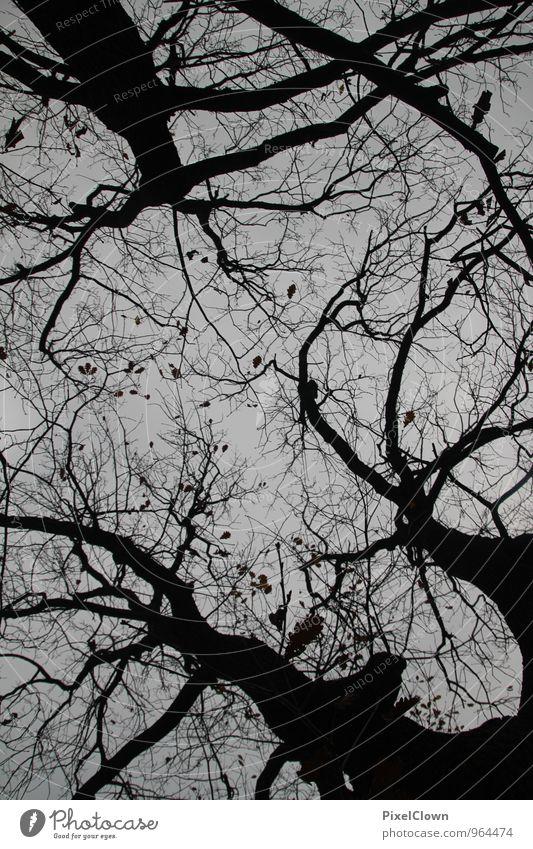 Düsterer Wald Natur Pflanze Baum Einsamkeit Landschaft Winter schwarz dunkel Traurigkeit Herbst Holz Stimmung träumen Angst bedrohlich