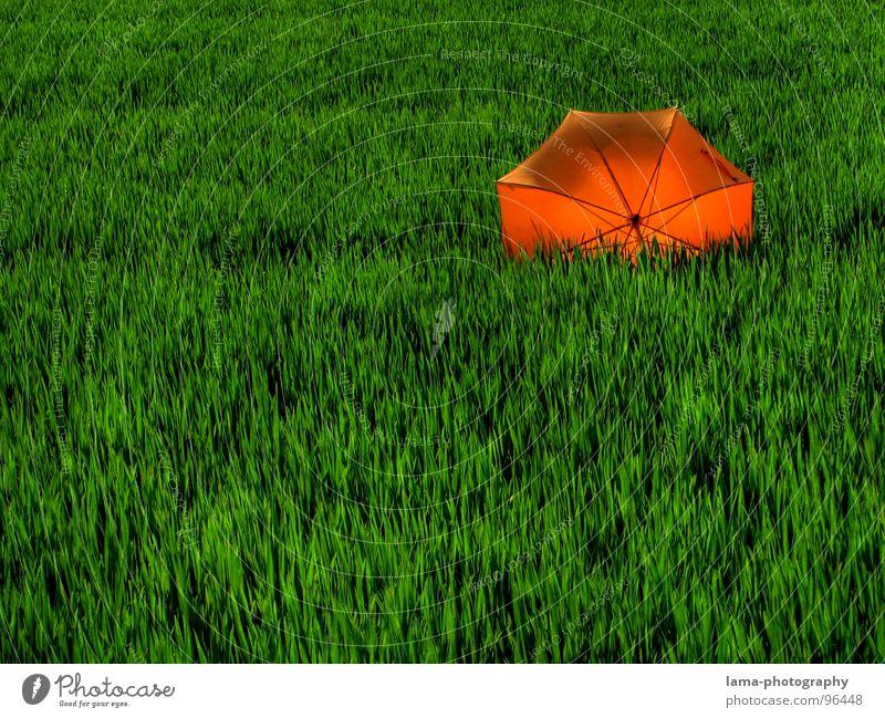 Im Gegenlicht Cloppenburg Regenschirm Sonnenschirm Unwetter Wolken Gras Halm Wiese Sommer Feld grün Frühling ruhig Einsamkeit Erholung Sonnenbad vergessen