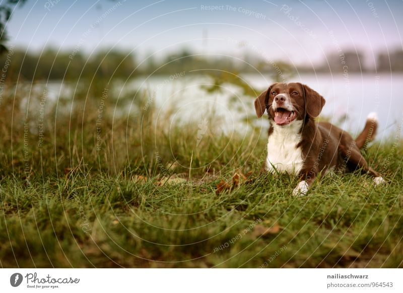 Hund am See Natur Sommer Seeufer Flussufer Teich Tier Haustier 1 beobachten Erholung liegen Blick warten Freundlichkeit Fröhlichkeit Neugier niedlich blau braun