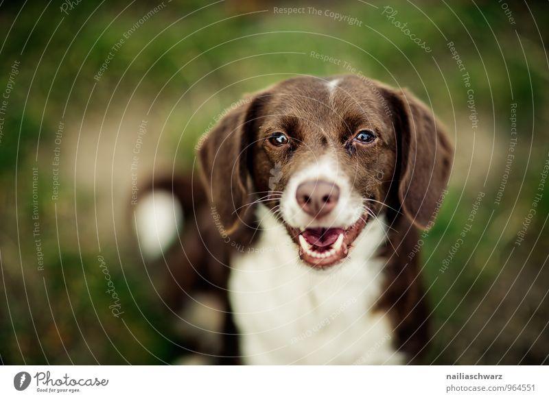 Hund Natur schön grün weiß Tier Wald natürlich Gras Glück Garten braun Park sitzen Fröhlichkeit warten