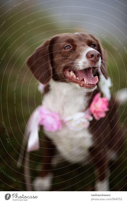 Hund Natur schön weiß Freude Tier Wiese Liebe Glück braun Stimmung rosa Freundschaft Park Idylle Dekoration & Verzierung