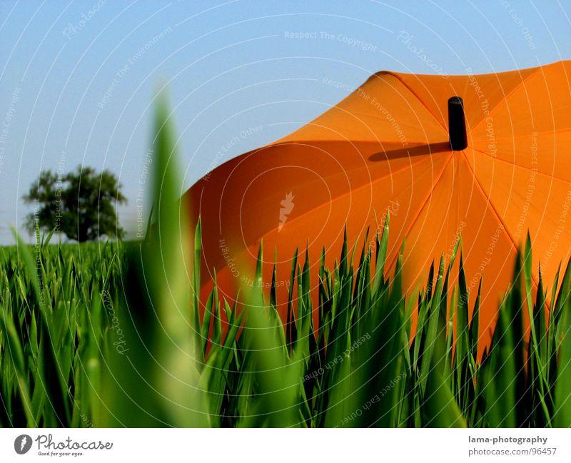 Der Baum Cloppenburg Regenschirm Sonnenschirm Unwetter Wolken Gras Halm Wiese Sommer Feld grün Frühling Blumenwiese Umwelt sommerlich Pflanze Sonnenstrahlen
