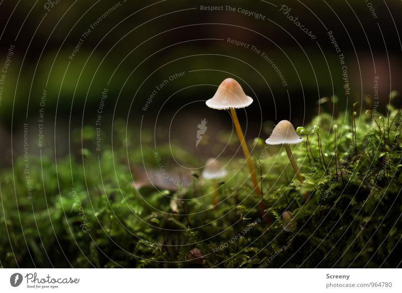 Spaziergang mit Hut Natur Pflanze Herbst Moos Pilz Pilzhut Wald Wachstum dünn klein braun grün Gelassenheit geduldig ruhig Idylle Zusammenhalt Farbfoto