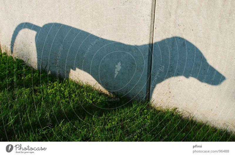Schatten Hund - 2 Dalmatiner Wiese Wand Mauer Tier Haustier Schattenspiel Licht Säugetier dog chien dalmatian dalmation Selbstportrait sonnne Silhouette